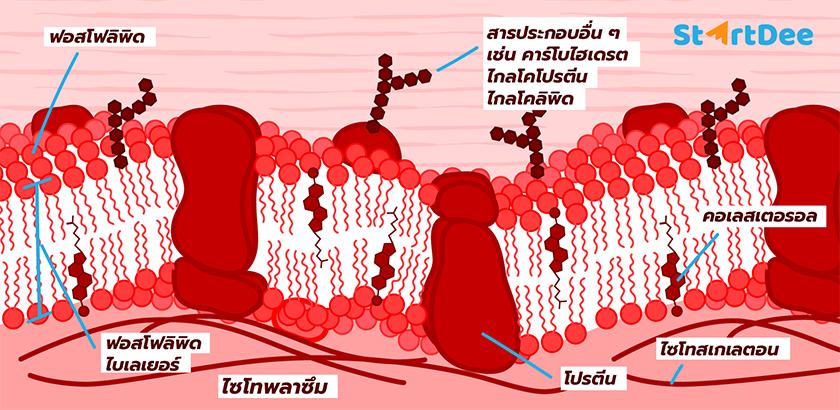 Blog-Illustrate_Draft02
