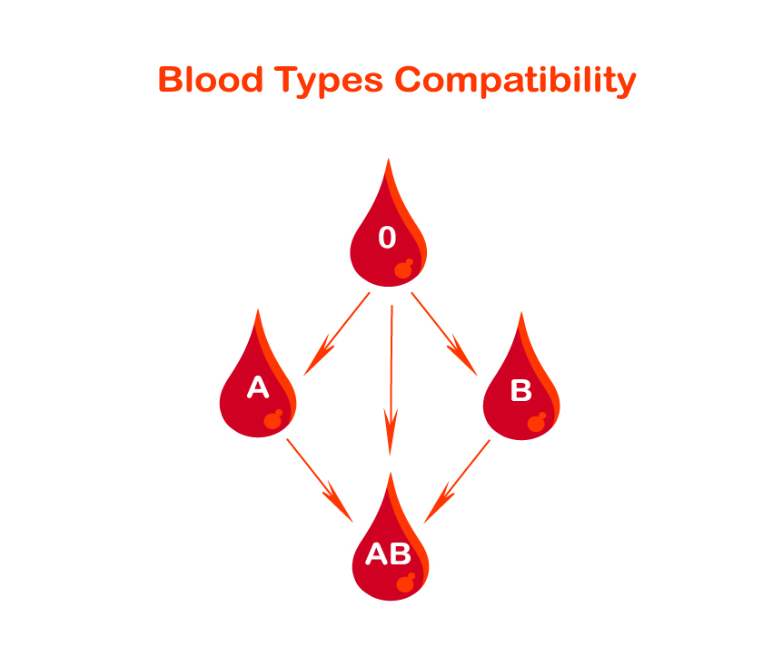 Blood-Type-Compatibility